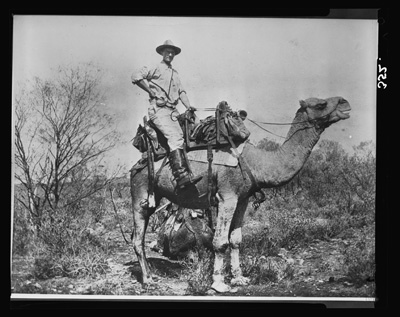 Herbert Basedow on Buxton, a riding camel, near present-day Granite Downs station, South Australia, 1903. Photograph by Alfred Treloar using Basedow's camera