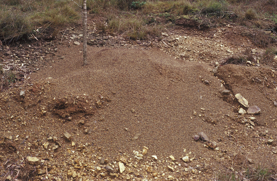 nest mound of the Southern Meat Ant